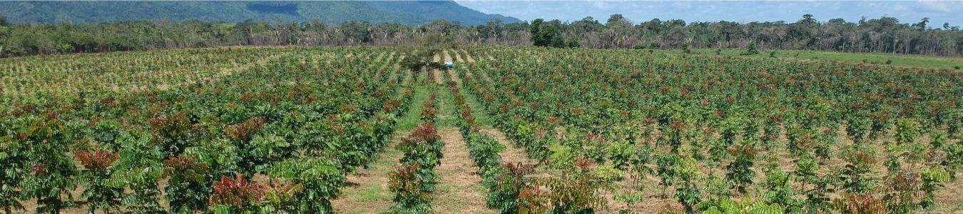 RADIX Florestal capa