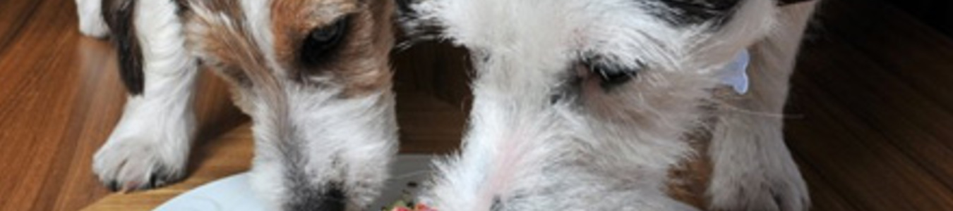 Pet Delícia capa