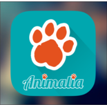 Animalia Digital logo